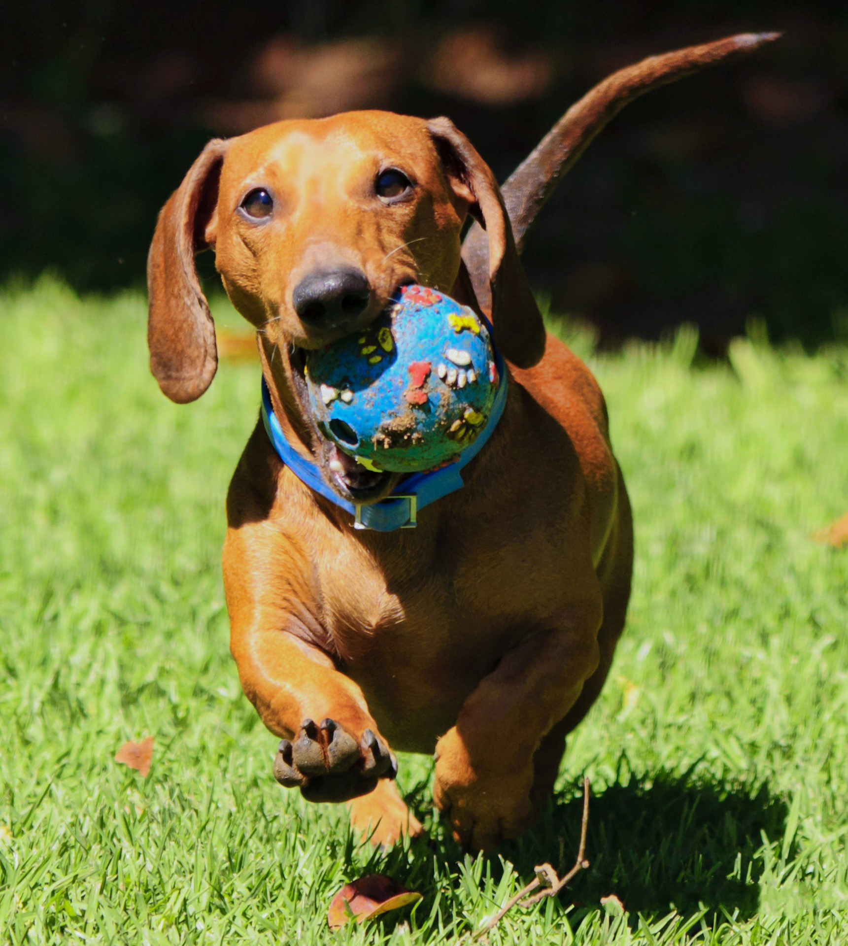 Jak vybrat správné interaktivní hračky pro psy?