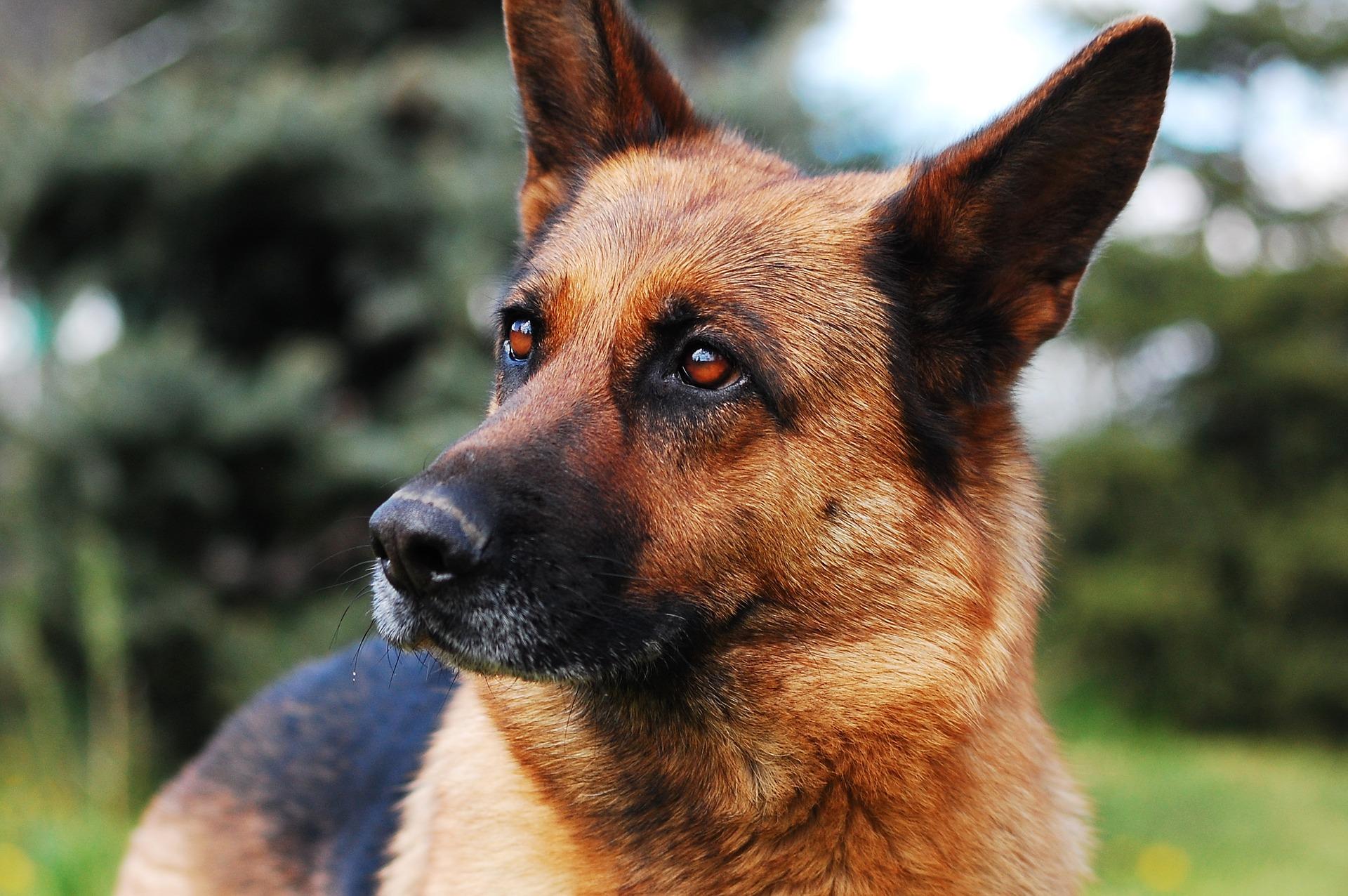 dog-2386814_1920