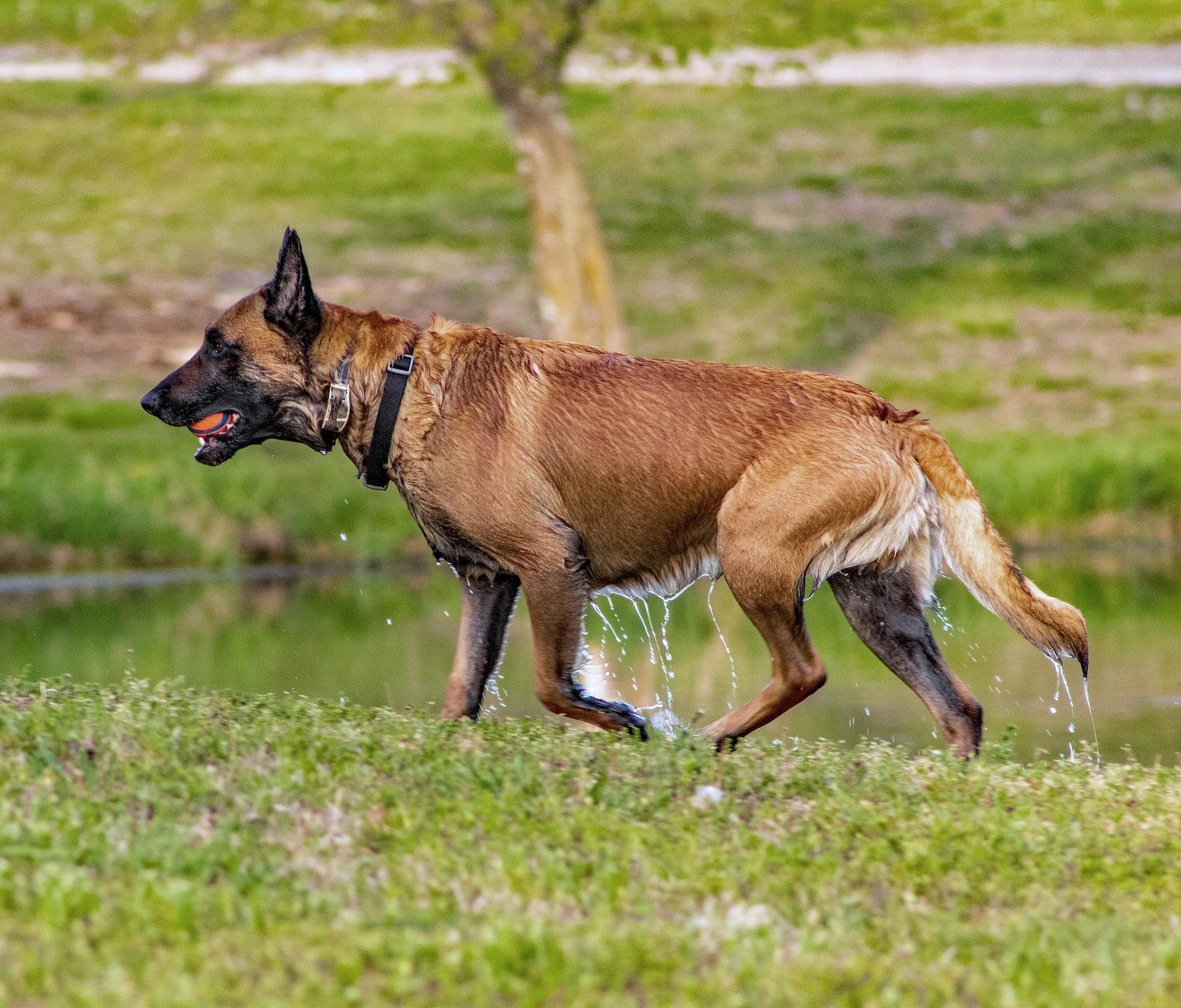 dog-5094589_1920