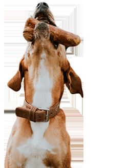 canophera_rheine_kaffeeholz_kaustaebe_hund_footerdog_dog_2