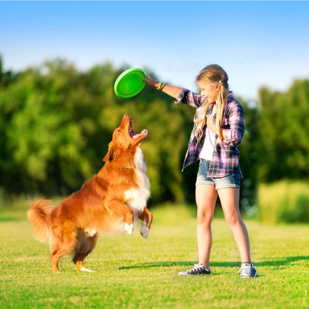 flyber-flying-disk-for-dogs_5