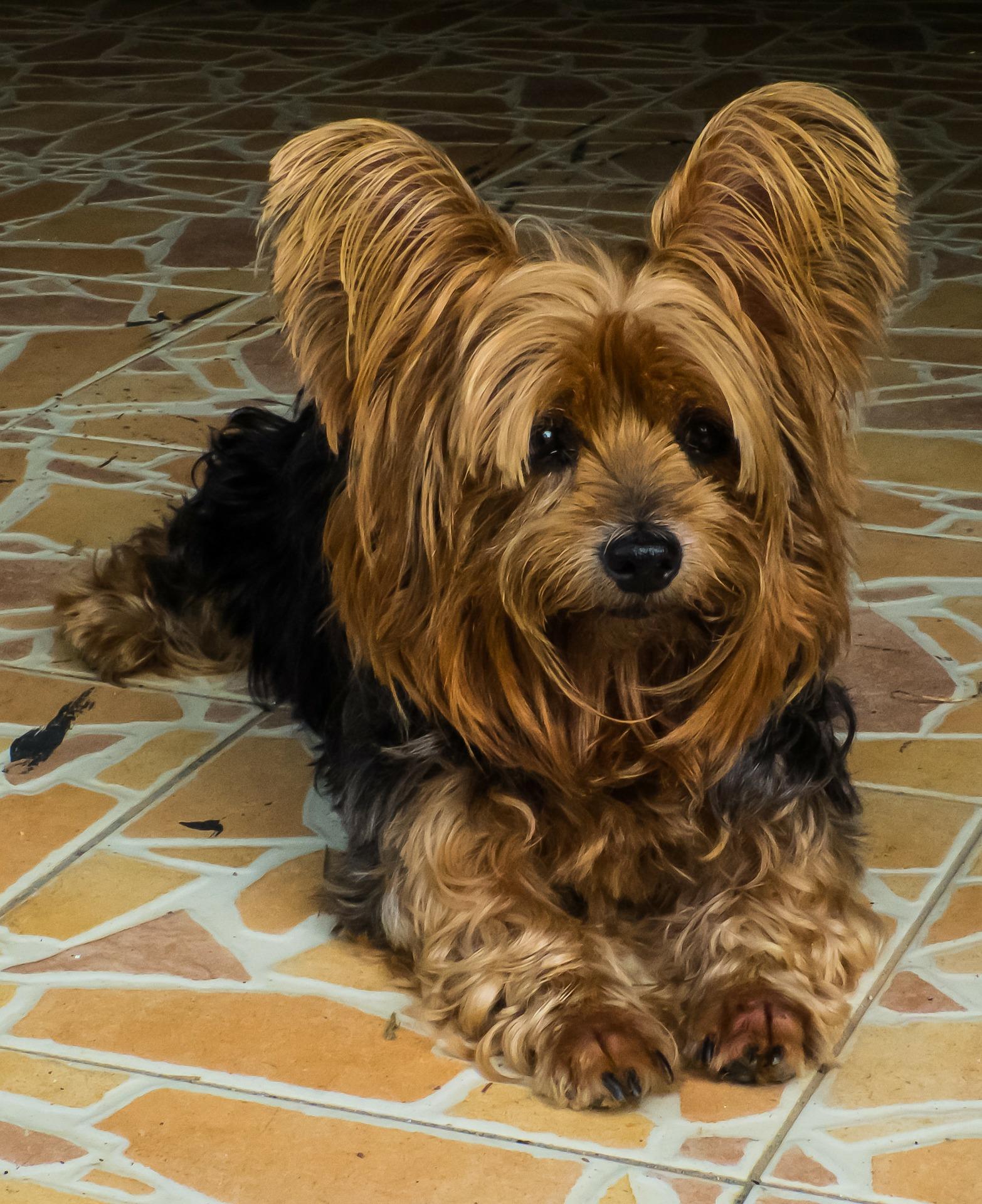dog-200952_1920