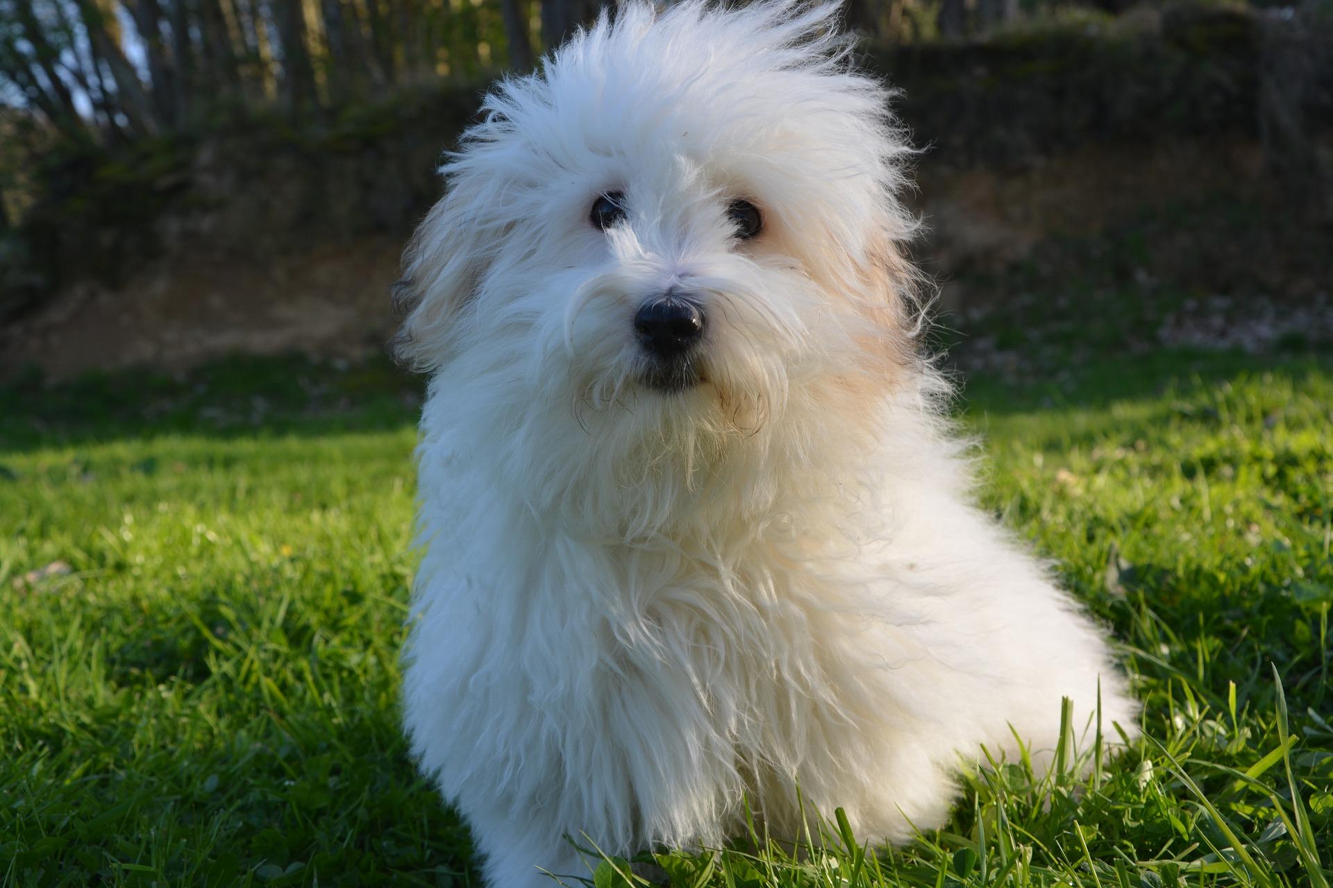 dog-2226330_1920