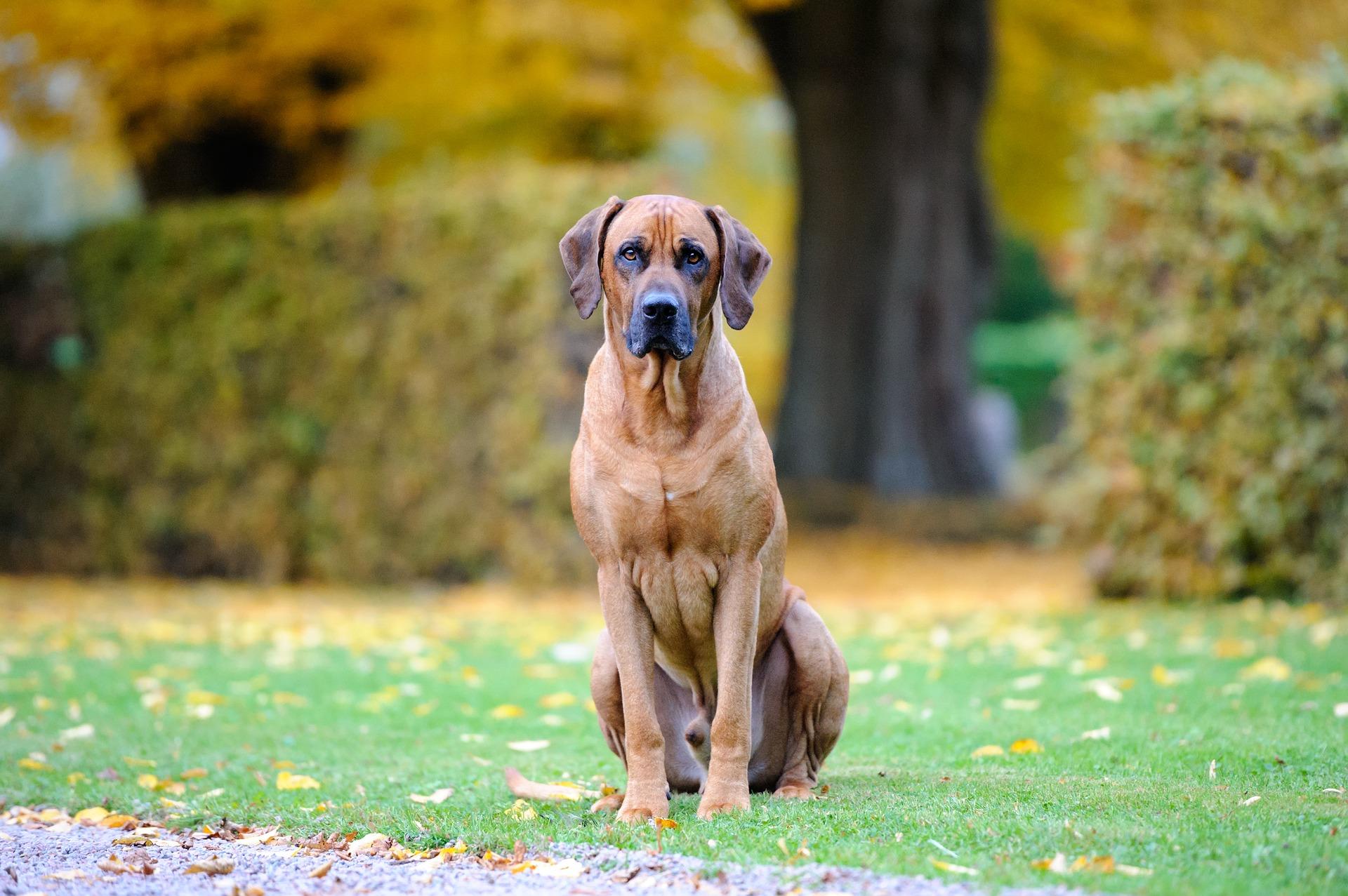dog-3757537_1920