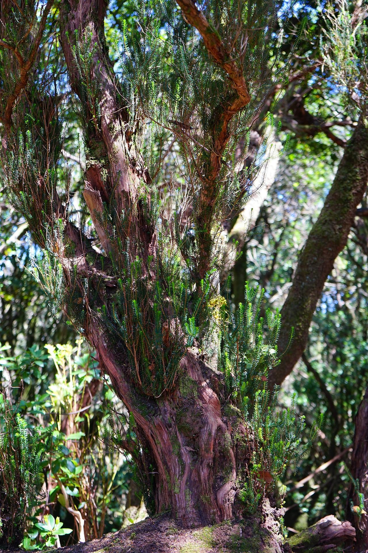 tree-heath-461216_1920
