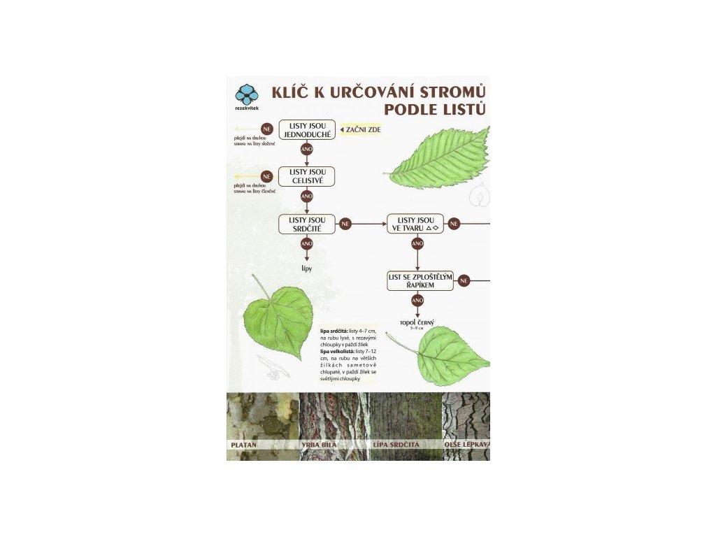 klic určování stromů podle listů