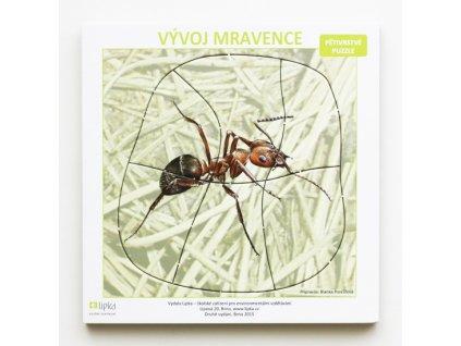 Vývoj mravence