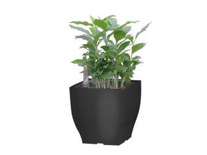 Samozavlažovací květináč G21 Cube mini černý 13.5 cm