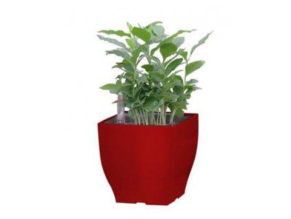 Samozavlažovací květináč G21 Cube mini červený 13.5 cm