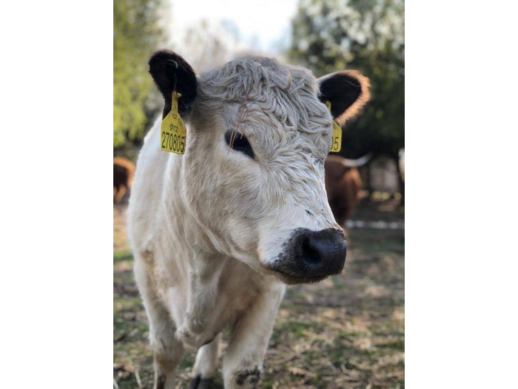 GALLOWAY Hovězí karabáček  100% grass fed z farmy Letařovice