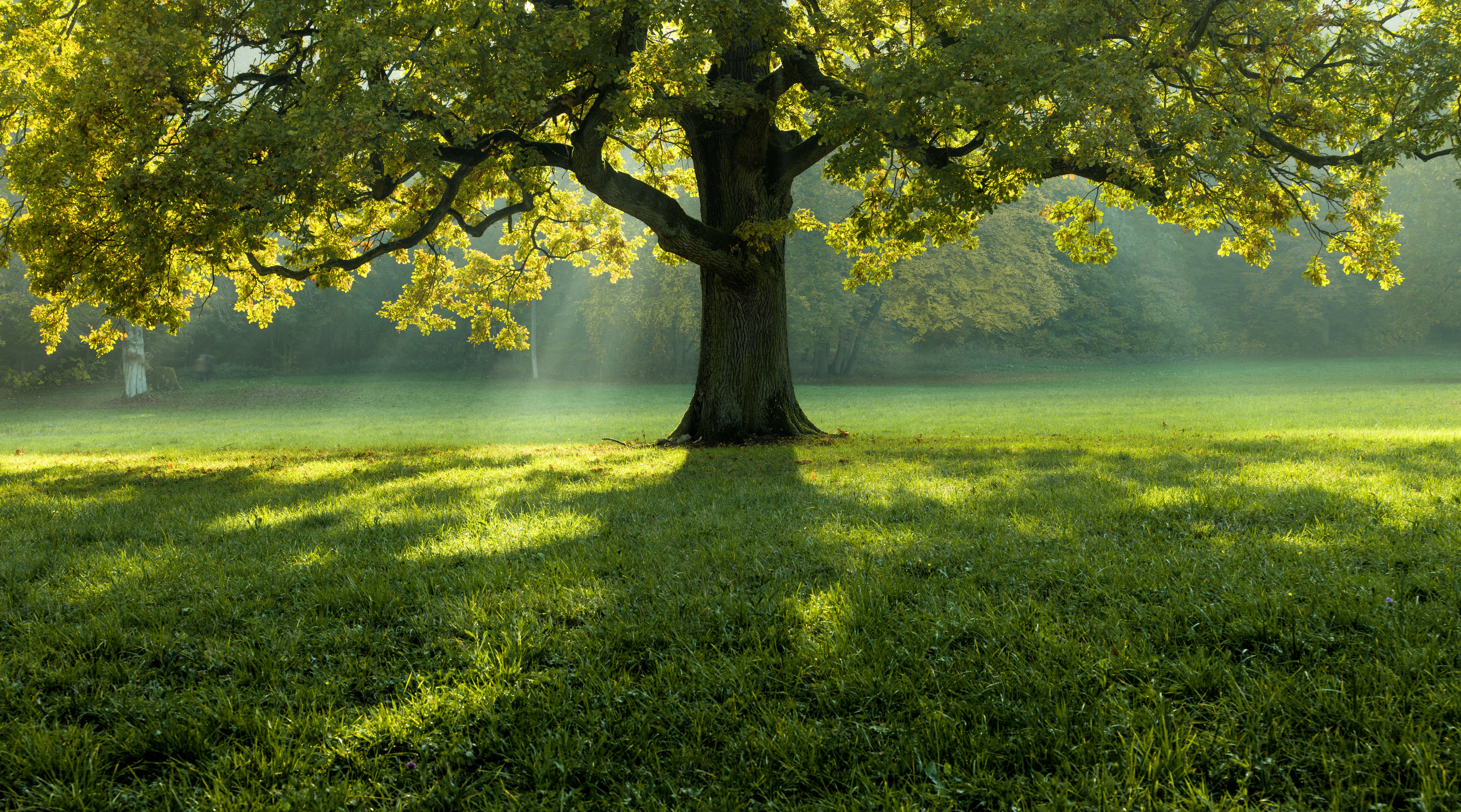 beautiful-tree-middle-field-covered-with-grass-with-tree-line-background