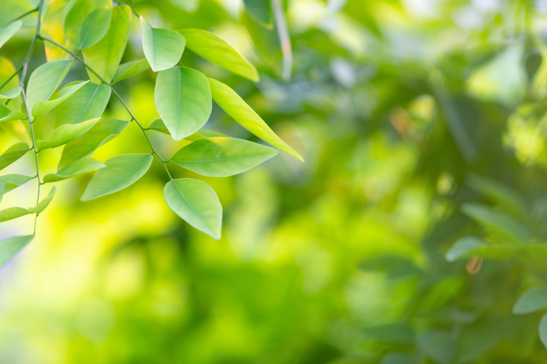 green-leaf-forest