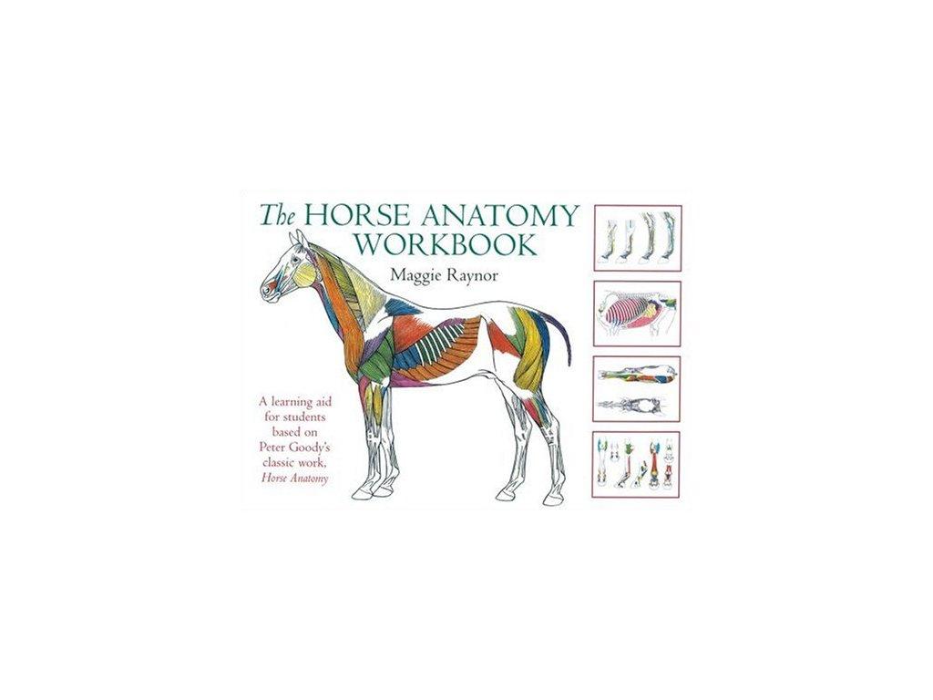 166 horse anatomy workbook maggie raynor
