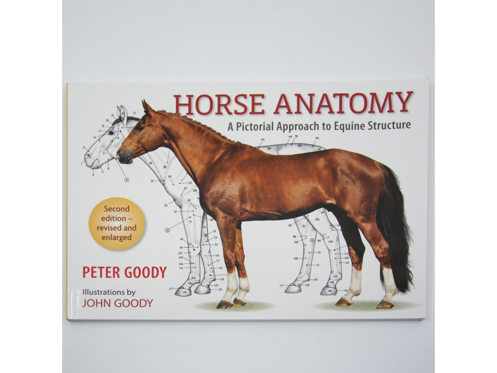 Horse Anatomy Pictoral approach