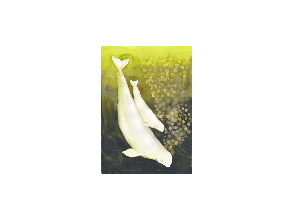 Obr. 17 – Běluhy A4 (Rozměr A3)
