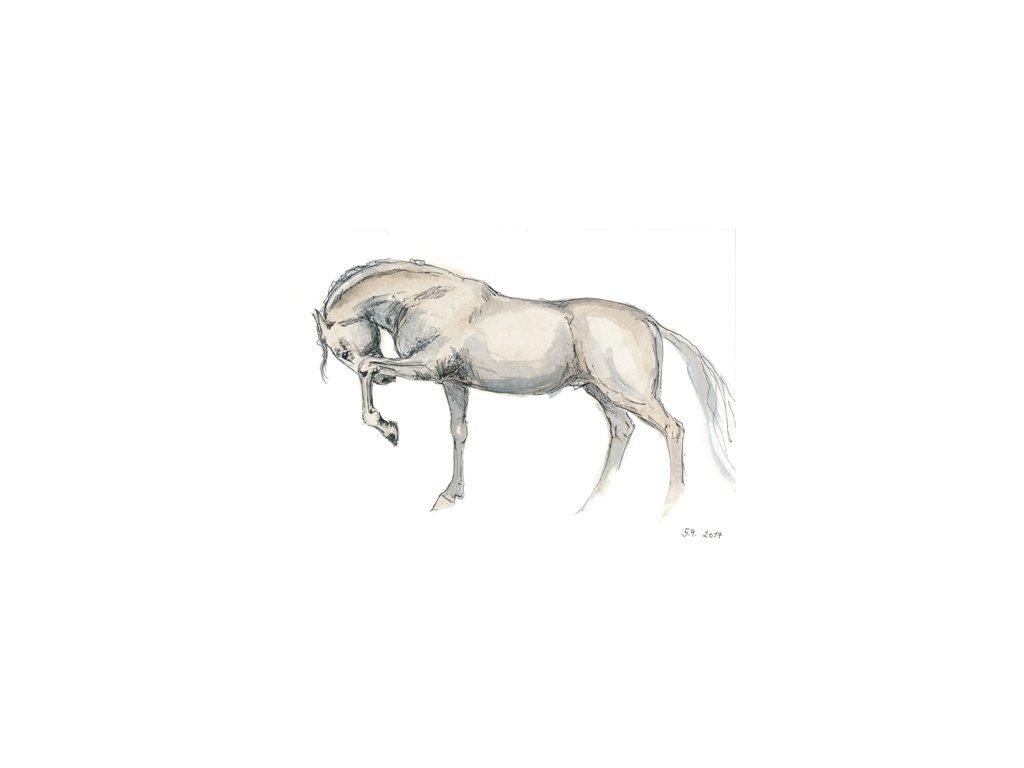 Obr. 4 – Bílý kůň A4 (Rozměr A4)