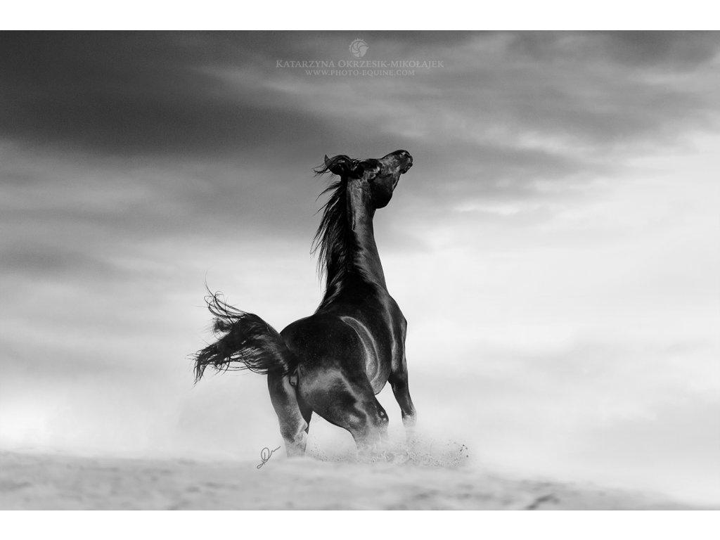 Desert Spirit 40 x 60 cm (Rozměr 100 x 150 cm)