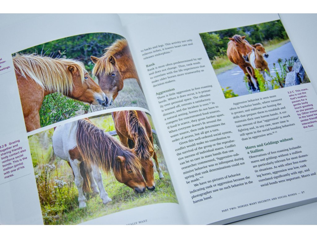 724 what horses really want lynn acton
