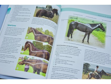 2290 posture and performance principles of training horses from the anatomical perspective gillian higgins stephanie martin