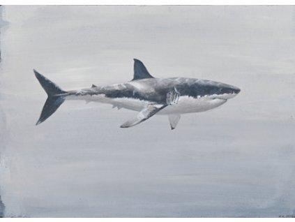 Obr. 24 – Žralok bílý A5 (Rozměr A3)