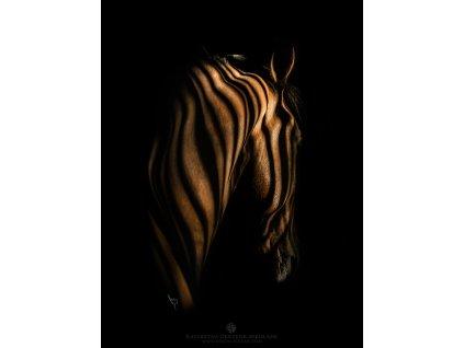 Shaded tranquility 30 x 40 cm (Rozměr 100 x 145 cm)