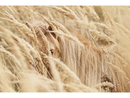 The Grain 40 x 60 cm (Rozměr 100 x 150 cm)