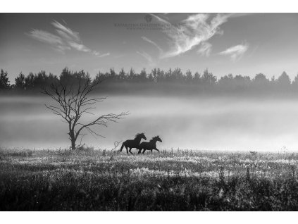 Morning at Masuria 50 x 75 cm (Rozměr 100 x 150 cm)