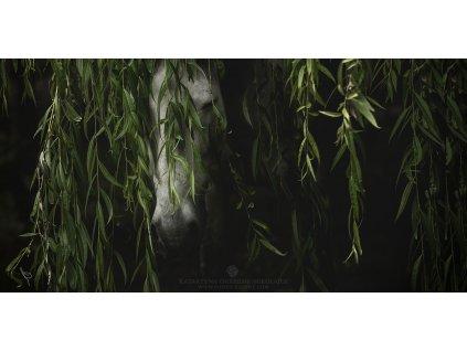 Forest Fairy 40 x 80 cm (Rozměr 70 x 140 cm)