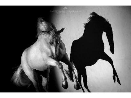 Shadow of joy 70 x 105 (Rozměr 70 x 105)