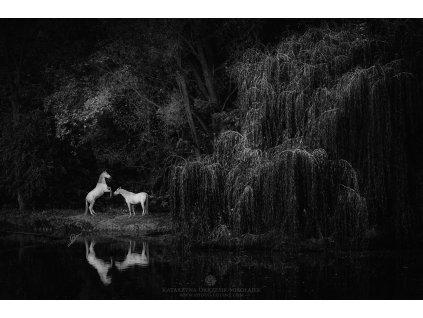 Unicorn trail 70 x 105 (Rozměr 100 x 150 cm)