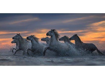 Horses of the Sea 50 x 100 cm (Rozměr 70 x 140 cm)