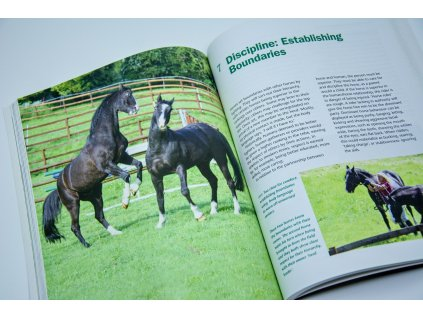 847 the psychology of horsemanship understanding the horse and you claire lilley