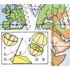 Obraz světa - glóbus