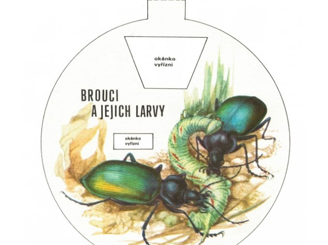 Brouci a jejich larvy