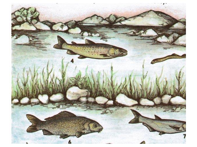 Vyhynulé a ohrožené druhy ryb v ČSSR