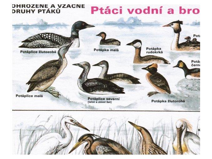Ptáci vodní a brodiví