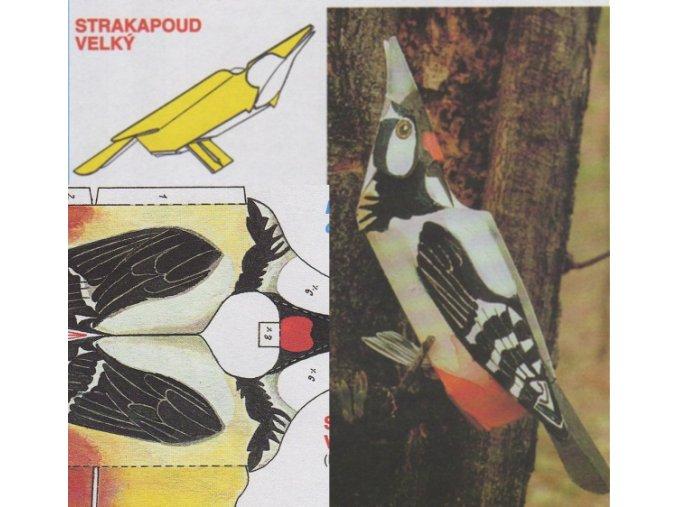 Strakapoud velký
