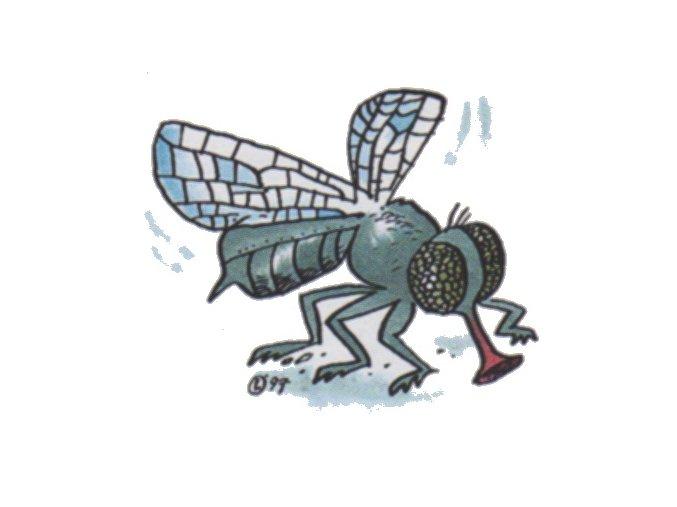 Moucha Mařka