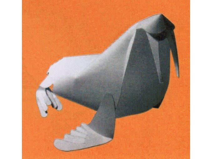 Mrož pacifický - Odobenus rosmarus divergens