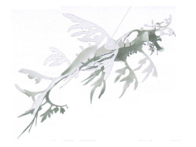 Řasovník rozedraný - Phycodurus eques
