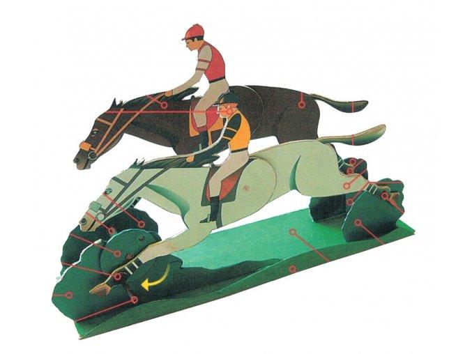 dostihoví koně