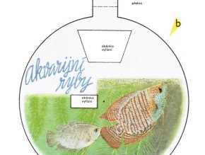 Akvarijní ryby - pohlavní dvojtvárnost