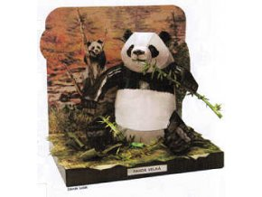 Panda velká - Ailuropoda melanoleuca