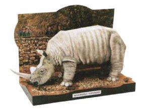 Nosorožec tuponosý severní - Cerathoterium simum cottoni