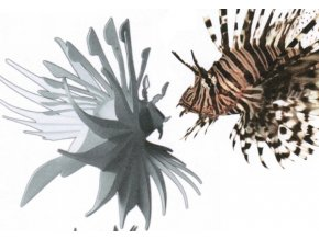 Perutýn ohnivý - Pterois volitans
