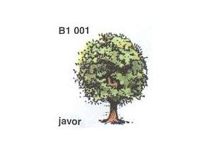 Javor (2ks)