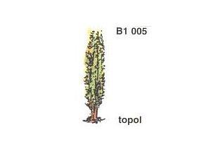 Topol (3ks)