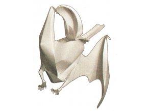 Netopýr ušatý - Plecotus auritus