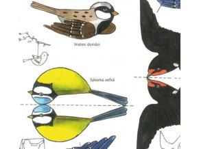 štěbetaví ptáčci