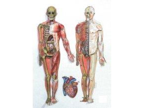 3D anatomie člověka